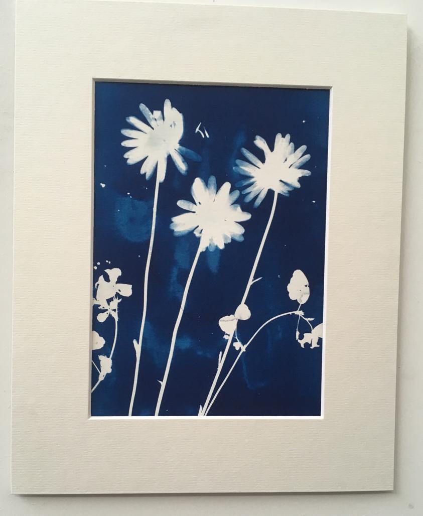 Cyanotype print of flowers.