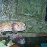 Downtown Aquarium - 116_3888.JPG
