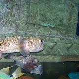 Downtown Aquarium - 116_3888.JPG