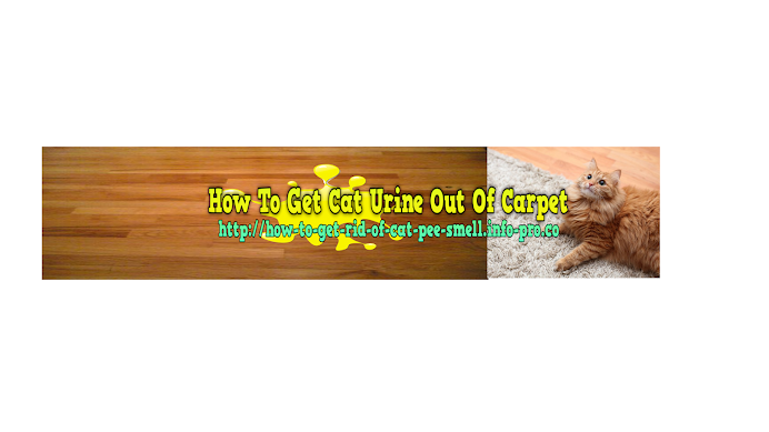 ... cleaning cat urine out of carpet ideas ...