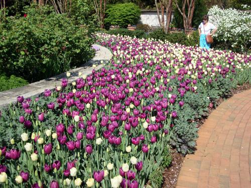 Wanderlust atlanta atlanta botanical garden atlanta blooms - Atlanta botanical garden membership ...