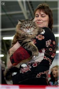 cats-show-24-03-2012-fife-spb-www.coonplanet.ru-067.jpg