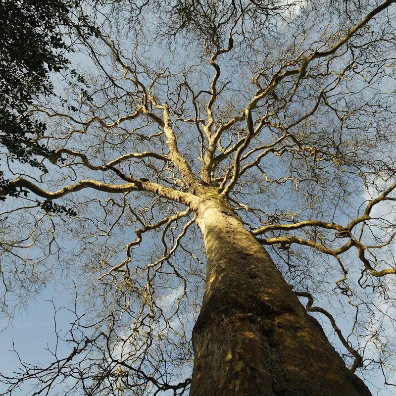 Stowe_Trees_32.JPG
