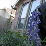Gardening 2012 - IMG_2851.JPG