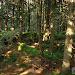 Dzień Trzeci - Zielony szlak z Hali Miziowej do Sopotni Wlk