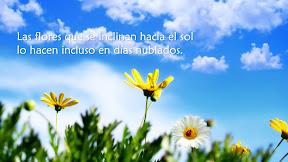 Las flores que se inclinan hacia el sol lo hacen incluso en días nublados