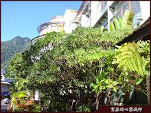 惠來谷關溫泉會館熱帶植物造景