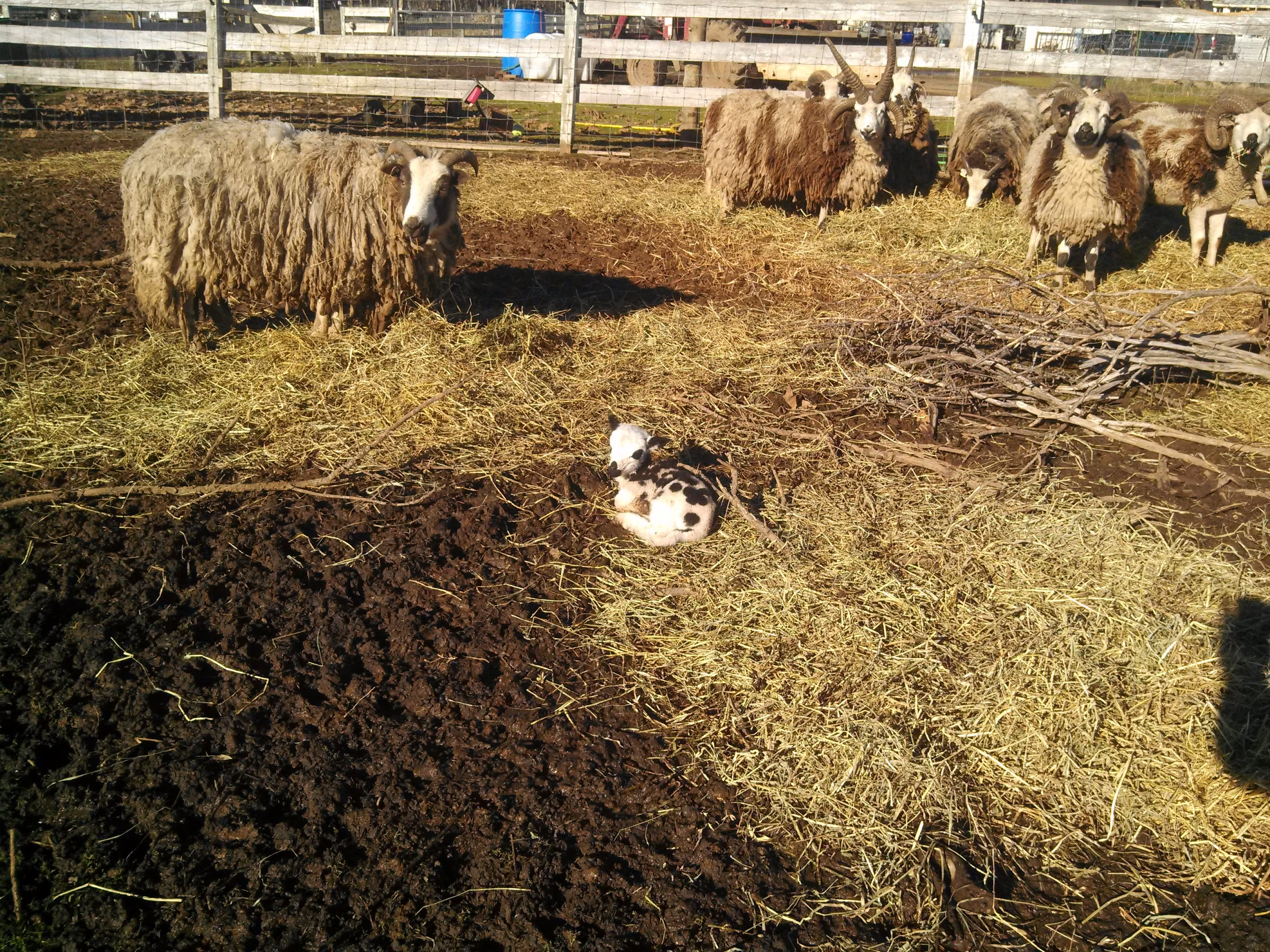 Life With Little Sprouts Farm: January 2016