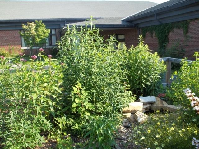 Melissa Jones Schoolyard Habitat Garden - Image.jpg