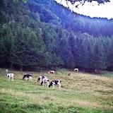 Kamnik–Savinja Alps - Vika-02981.jpg