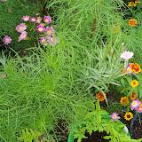 Gardening 2010, Part Three - 101_3962.JPG