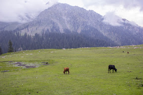 Jahaz Banda Meadows on the way to Katora Lake.