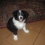 2005 Cucciolata E (9).jpg
