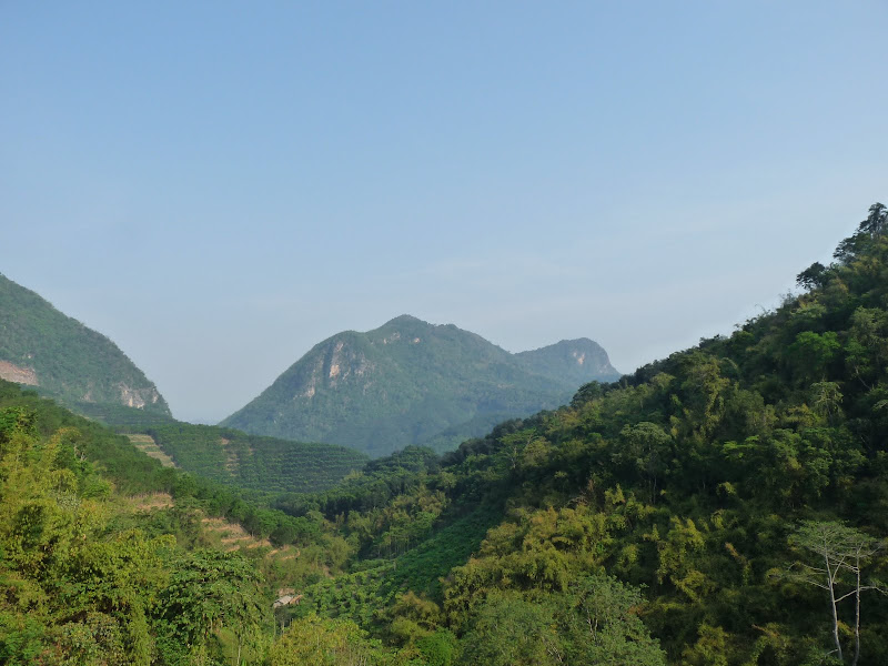 Chine. Yunnan.elephant valley,. Mengla ,arbres géants - Picture%2B1250.jpg
