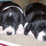 The Dynamite Danes Family! - 100_0286a__5x7%255B1%255D.jpg