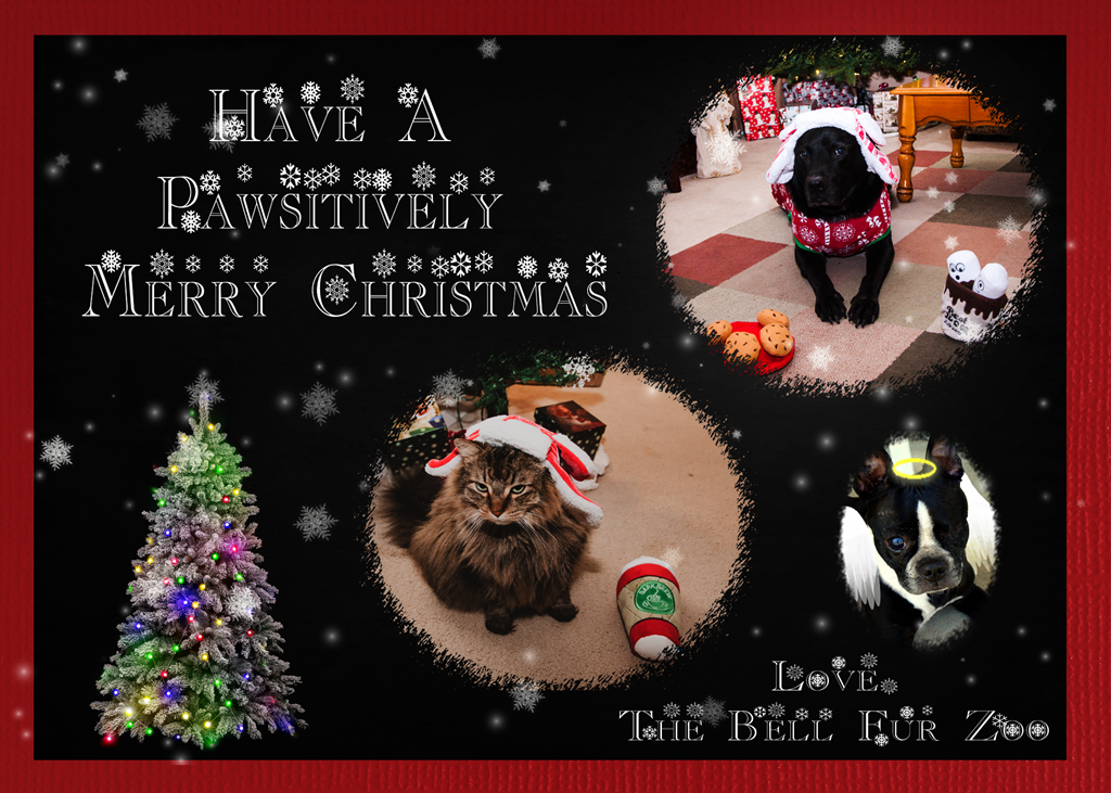[Bell+Fur+Zoo+Christmas+Card+2017%5B4%5D]