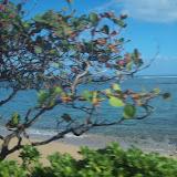 Hawaii Day 3 - 114_1059.JPG