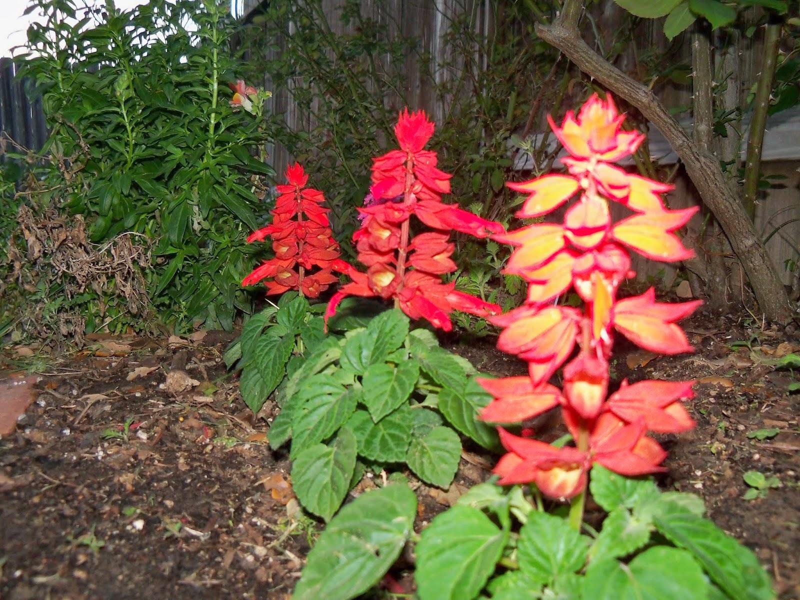 Gardening 2014 - 116_1135.JPG