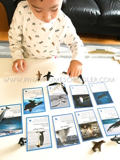Animals of Antarctica Printable with Safari Toob Antarctica Set