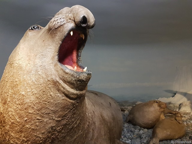 Realistic looking stuffed Sea lion and pups