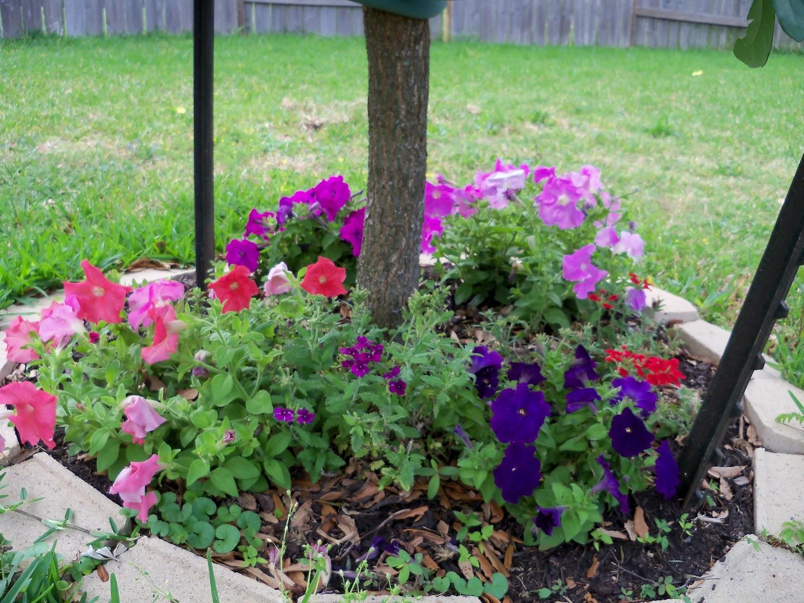 Gardening 2011 - 100_7637.JPG