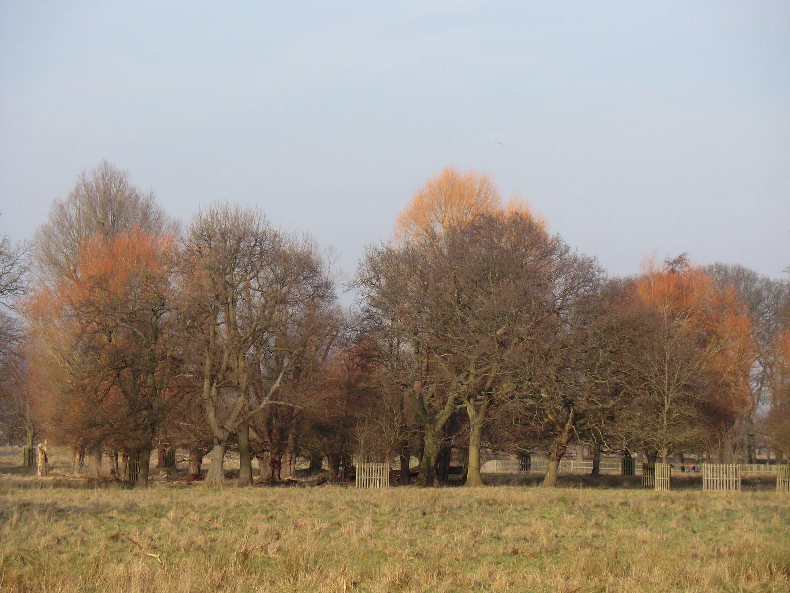 CIMG6518 Winter colour, Bushy Park