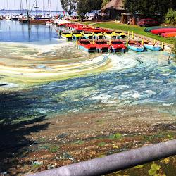 Algenproblem Fischsterben Bornbachumleitung