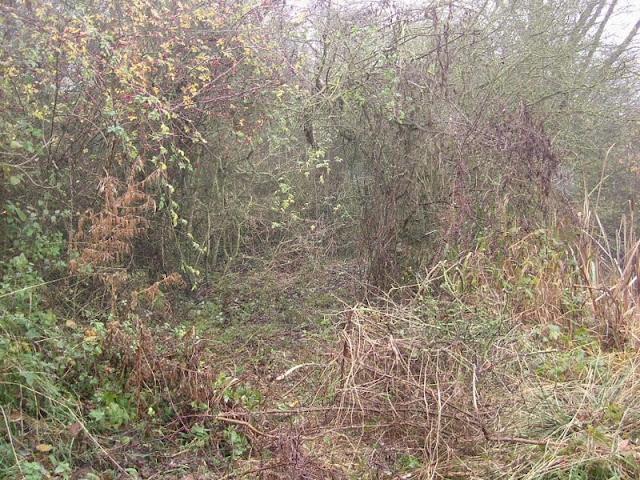 Conservation Area November 2008 - DSCF1336.jpg