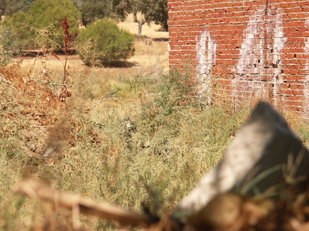 FOTOS DE JUEGOS DE GUERRA 2. 12-08-12 PICT0097