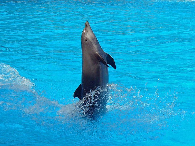 diabetes dolfijn zoogdier kenmerken