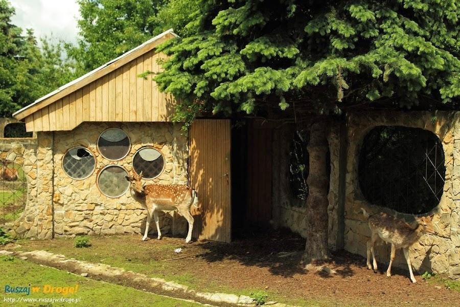 Sanktuarium Maryjne Kałków Godów - Golgota Wschodu - mini zoo