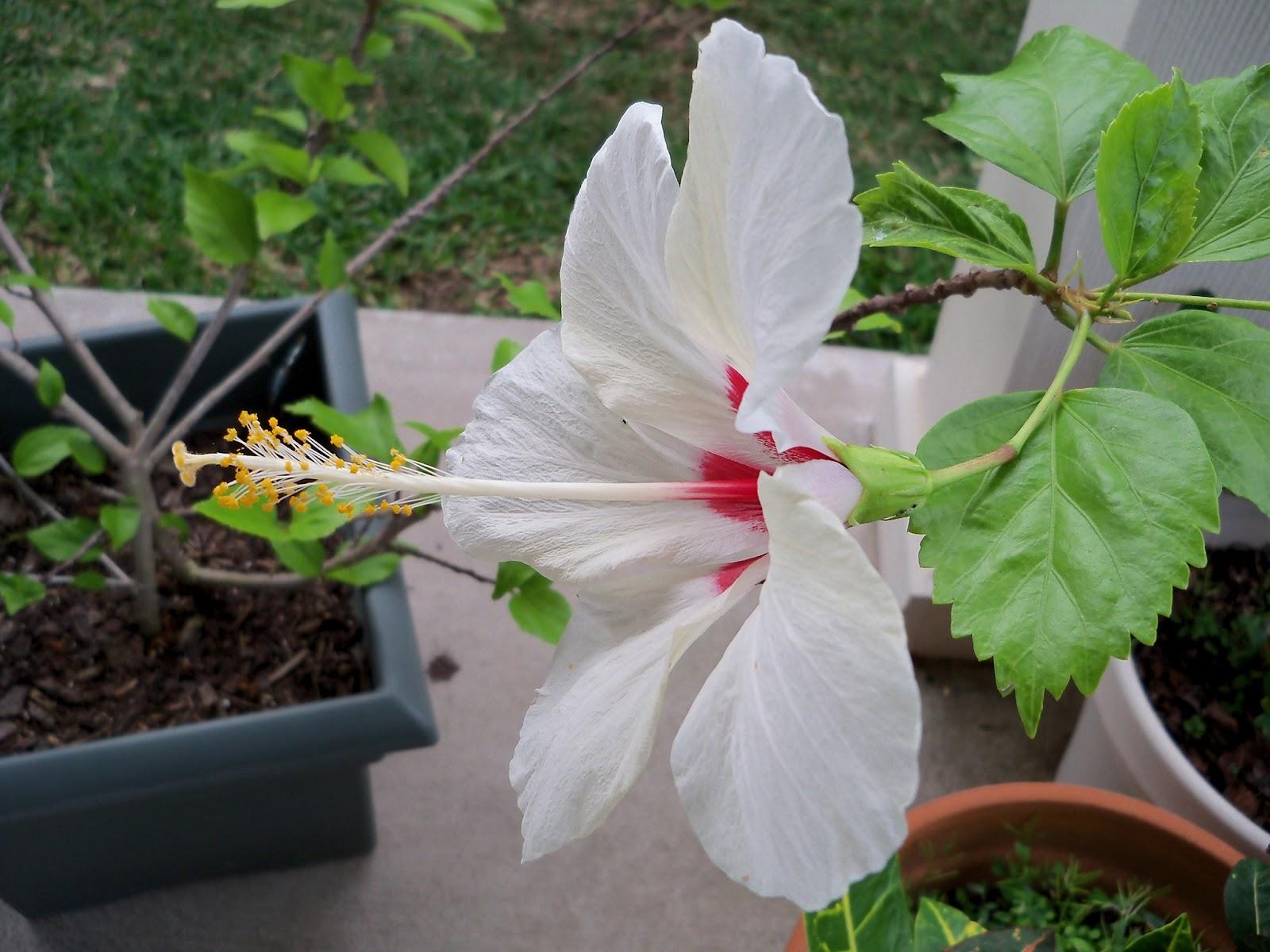 Gardening 2012 - 115_2164.JPG