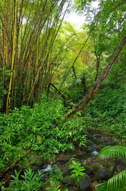 06-23-13 Big Island Waterfalls, Travel to Kauai - IMGP8840.JPG