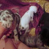 Gemma's babies @ 4 weeks
