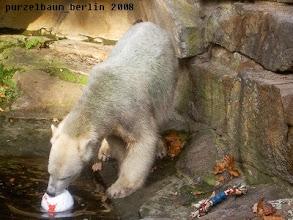 Photo: Der Ball macht bei Knut das Rennen :-)