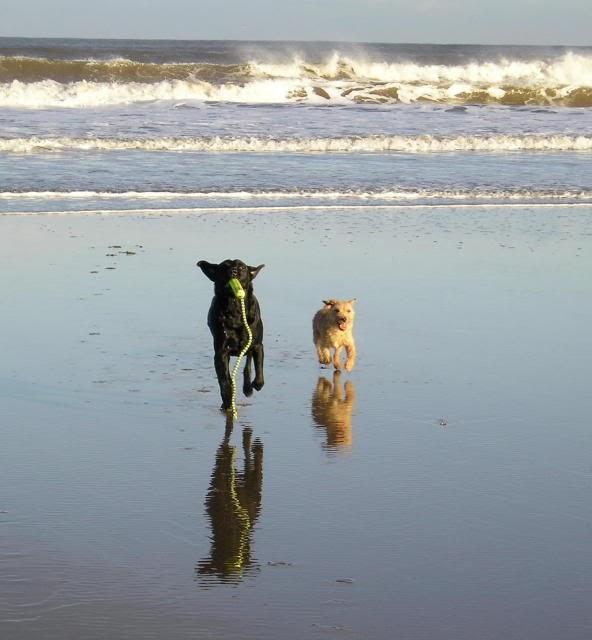 Pet Friendly Long Term Rentals In North Myrtle Beach Sc