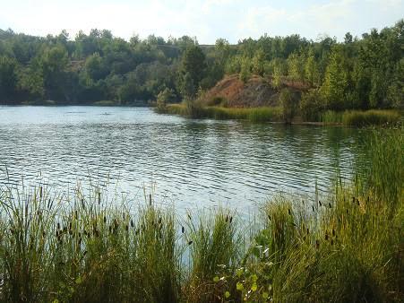 Растительность на Рготском озере