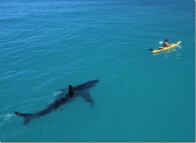 Imagens que o farão pensar duas vezes antes de entrar na água 03