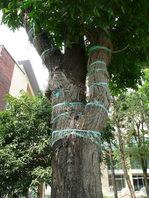 TAIWAN.Dans la région de Nantou, au centre de Taiwan - P1100397.JPG