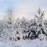 Первый густой снег