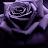 Shannon C. Green avatar image
