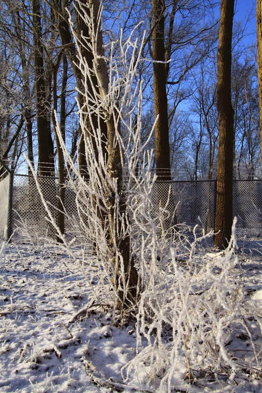 Winter - Winter-002.jpg