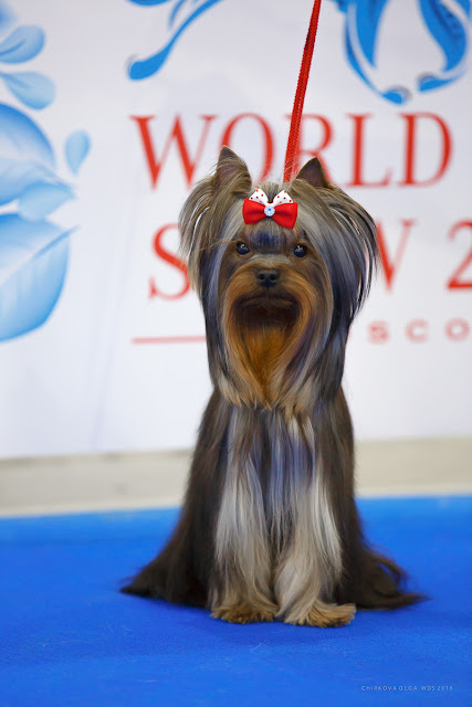 World Dog Show-2016 6891