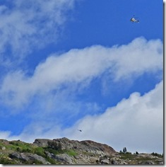 Helicopters flying over Salmon Glacier viewpoint
