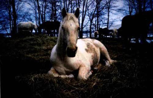 Nature Gentle Spirits Horses