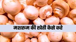 मशरूम की खेती कैसे करें 2021   How To Start mushroom Farming In Hindi