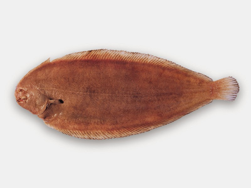 Dil Baligi (sole fish)