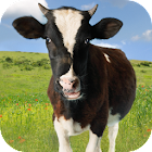 Cow Sounds icon