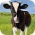Cow Sounds file APK for Gaming PC/PS3/PS4 Smart TV