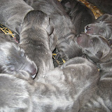 birthday litter photo